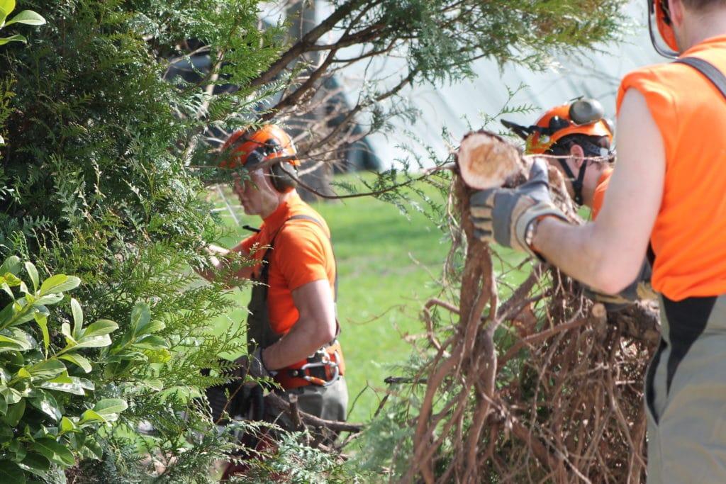 Déblaiement d'arbres par les pionniers